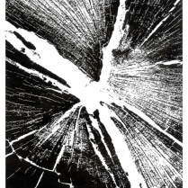 'Tree Stump' 2015. Series of 12. Perspex Etching. 21 x 15cm.