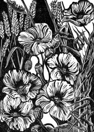 'Common Poppy - arable field margin' 2016. Series of 75. Wood engraving. 10 x 7cm.