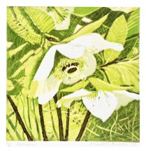 'Hellebore' Reduction Lino. 15 x 15 cm.